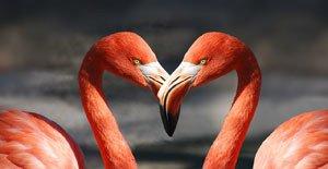 flamingo web-600205_1280