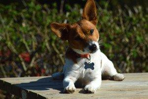 curious doggie